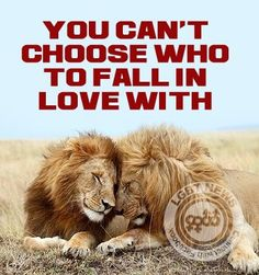 You can't choose who to fall in love with