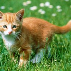 Cat Breeds A To Z Cat Savannah Cute Cat Pictures And Photos Stunning Photos Of Types Cute Animals Cat Breeds Tabby Cat