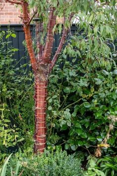 Inspirational garden and backyard garden design tips #middlesizedgarden