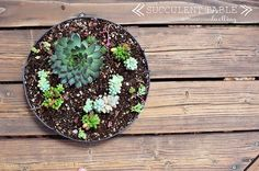 Succulent Table, Delineate Your Dwelling - week 6 Flowering Succulents, Planting Succulents, Garden Projects, Home Projects, Garden Ideas, Plant Projects, Gardening For Dummies, Privacy Plants, How To Make Terrariums