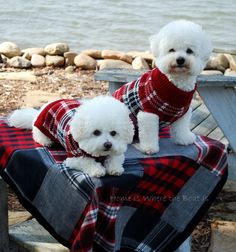 getting these for my bichons