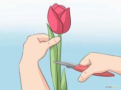 Aprende a plantar y cuidar tulipanes vía es.wikihow.com