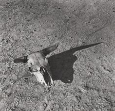The Bleached Skull of a Steer on the Dry Sun-Baked Earth of the South Dakota Badlands, Arthur Rothstein.Dans le cadre de la Farm security action, de 1937 à 1942 Stephen Shore, Walker Evans, History Of Photography, Documentary Photography, Modern Photography, South Dakota, No Photoshop, Road Trip Usa, Moma