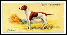 """Ogden's Cigarettes """"Dogs"""" (series of 50 issued in Pointer Sealyham Terrier, Gordon Setter, English Pointer, Dog Artwork, Birds Of America, Collectible Cards, Vintage Dog, Wild Dogs, Old Postcards"""