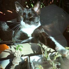 It's a very good sunny day ☀️❤️#mygreatcat #my_loving_pet #cat #gatto #catoftheday #catsofinstagram #catstagram #gatti #instacat #instacat_meows #bestmeow #topcatphoto #miao #catlover #gatto #catoftheday #katze #gato #chat #猫  #neko #猫好き #Exellent_Cats #子猫 #プッシーキャット #ニャー #甘い #愛猫