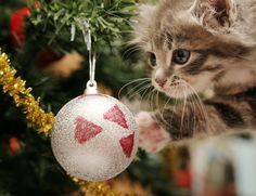 Love Christmas? - - - - - - - - - - - - - - - - - - - You'll love myletterfromsantaclaus.com . #FatherChristmas #Christmas #Santa #Festive #santaletter #santaletters #familytime #parenting #mummy #daddy