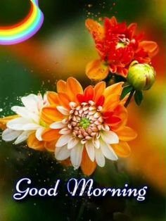 Good Morning Wishes Gif, Good Morning Monday Images, Good Morning Friends Images, Good Morning Beautiful Pictures, Good Morning Beautiful Flowers, Latest Good Morning Images, Good Morning Nature, Good Morning Images Flowers, Good Night Love Images