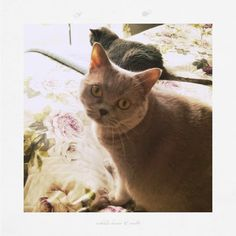 veredit-photographic-poems: The two cat photo shooting