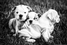 LITTLE FRIENDS PHOTO  Lifestyle Pet Photography by Seth Casteel