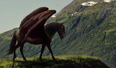 Hawthorn by kiltsrhott
