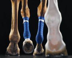 Tim Flach's Creative Photography Horse hooves Equine Photography, Wildlife Photography, Creative Photography, Photography Ideas, International Photography Awards, All I Ever Wanted, Contemporary Photography, Animals Images, Horse Love