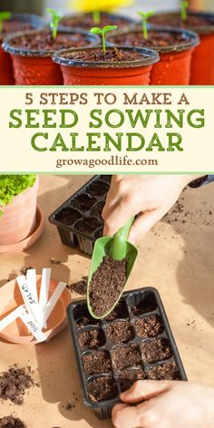 Developing a planting calendar is a helpful step for your yearly vegetable garden planning. Creating a schedule ahead of time makes it easy to know what seeds should be started each week. Read on for 5 steps to making a seed starting and planting schedule. Growing Tomatoes Indoors, Growing Veggies, Vegetable Garden Planning, Home Vegetable Garden, Garden Solutions, Bulbs For Sale, Garden Seeds, Planting Seeds, Tree Seeds