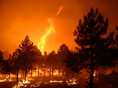 USDA and effects of climate change on forest management/Warm Fire by Kaibab National Forest/ photo via Flickr