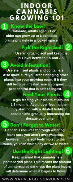 Need help growing your cannabis plants in Durango, CO? Check out our blog post http://www.nativerootsgarden.com/2015/11/17/indoor-cannabis-growing-101/ for more information!