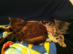 Our 3 Cats. They are my lovely family .