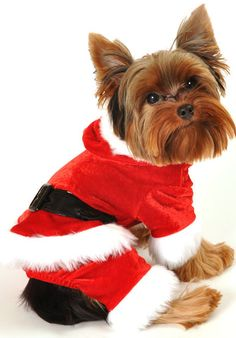Pet Costumes, Christmas, Holiday, Pet Puppy, Clothing, Apparel, Tiny
