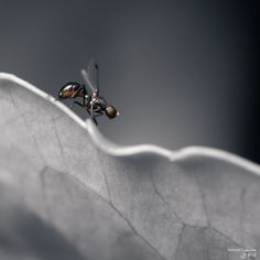 Dark Bug - 2 by Bruno Toujas on 500px