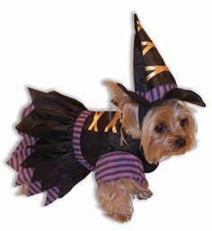 Witch Pet Costume Size Small Forum http://www.amazon.com/dp/B003OWVCY4/ref=cm_sw_r_pi_dp_JavPwb1D4Q5Y4