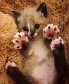 Look at my jellybeans !