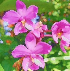 Digital altered photograph of Orchids   georgiamountainarts - Digital Art  on ArtFire. $2.00 All Notes, Alters, Note Cards, Orchids, Card Stock, Digital Art, Photographs, Prints, Handmade