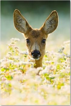 Bambi love.