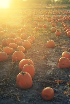 Pumpkin patches are my home... Basically. <3 If that was at all possible.