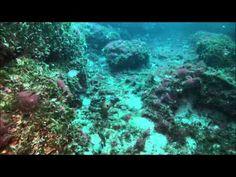 Plemmirio - Meraviglie della secca del capo