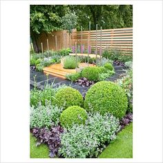GAP Photos - Garden & Plant Picture Library - Modern garden with Buxus sempervirens, Nepeta and Heuchera - GAP Photos - Specialising in horticultural photography