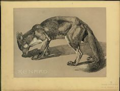 Renard. From New York Public Library Digital Collections.