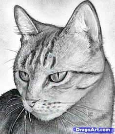 How to Draw a Cat Head, Draw a Realistic Cat