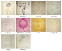 An Anthotype is a photographic sun print created in vegetable juice. These vegetable images were created by extracting juice from selected plants grown on the allotment and picked on an appropriate day in the biodynamic calendar. The juice was then used to dye handmade paper and a photographic image of the plant was printed onto acetate and placed over the dyed paper. This was then exposed to the sun for 2 to 6 weeks. The sun bleached away the unprotected dye on the paper creating a unique