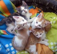 Cats- I want them all :)