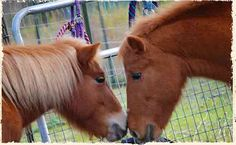 All Breed Horse Rescue