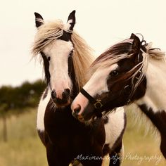 """""""I Like your Face"""" Equestrian Horse Photography - by Maximonstertje"""