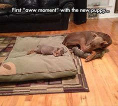 "first ""aww moment"""
