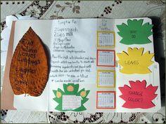 Autumn leaves lapbook