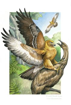 I was asked to design a card for the Sixth Extinction Card Deck, of the Haast's Eagle. Haast's Eagles lived in New Zealand and went extinct in the . Haast's Eagle - Sixth Extinction Deck Prehistoric Wildlife, Prehistoric World, Prehistoric Creatures, Extinct Animals, Rare Animals, Extinct Birds, Dinosaur Crafts, Dinosaur Art, Paper Plate Animals