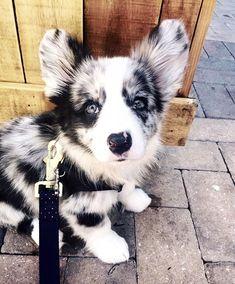 Dog And Puppies Drawings .Dog And Puppies Drawings Cute Dogs And Puppies, Baby Dogs, I Love Dogs, Doggies, Cute Little Animals, Cute Funny Animals, Beautiful Dogs, Animals Beautiful, Cute Animal Photos