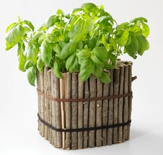 """Ok, I love this. A cardboard box planter with twigs and old hairbands for a little """"curbside appeal"""". Fun activity for the kids to put together."""