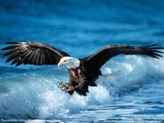 Eagles are such amazing and beautiful creatures...and this photo just goes to prove it!