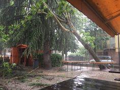Forte vento a Modena sradicato un albero ma nessun danno