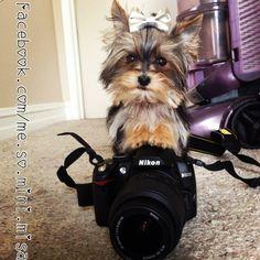 Misa Minnie with camera