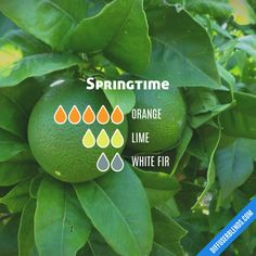 Springtime - Essential Oil Diffuser Blend