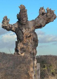 tree guy monster