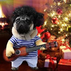 Cute & Funny Pet Guitarist Costume for Dogs and Cats -  Cute & Funny Pet Guitarist Costume for Dogs and Cats  #pet #dog #dogfashion #petlovers #dogaccesories  We realize how cute your puppy looks in her costume. But there are some things to keep in mind before choosing the right outfit for your dog. Nowadays, lots of people dress up their pets on special events such as for example New Year's Eve or holidays. Choosing dog clothes is usually fun, and seeing your pet in various costumes will…
