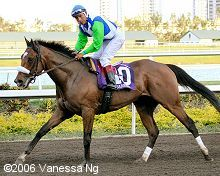 BARBARO THE DERBY WINNER Favorite racehorse of all time.