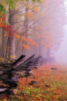 Fall in the Smokey Mountains. Great Smoky Mountains National Park is a United States National Park and UNESCO World Heritage Site that straddles the ridgeline of the Great Smoky Mountains