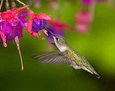 Hummingbird and beautiful flowers