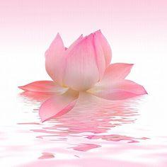 Startonight Glass Wall Art Acrylic Decor Pink Petals, 5 Stars Gift 23.62 X 23.62 Inch 100% Original Flowers Artwork the Ultimate Wall Art!