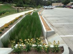 raingarden landscape architecture - Google Search
